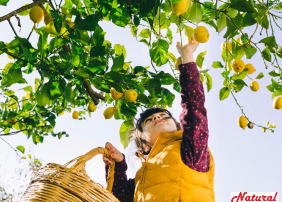 Frutas y verduras ecológicas para restauración de colectividades.